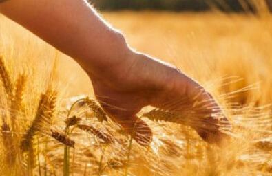 corso imprenditore agricolo professionale169